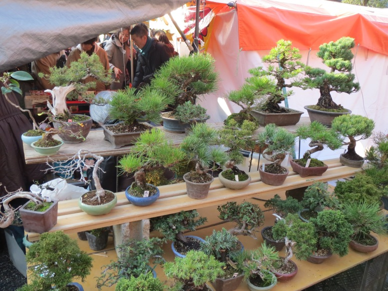 Bonsai on sale.  There was an entire section devoted to plants and gardening.